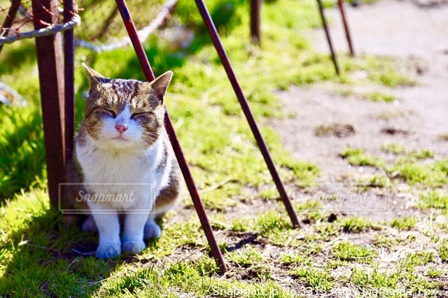 猫の写真・画像素材[531334]