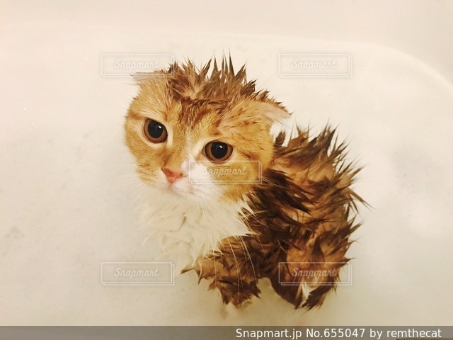 猫 - No.655047
