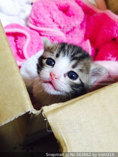 猫の写真・画像素材[563662]