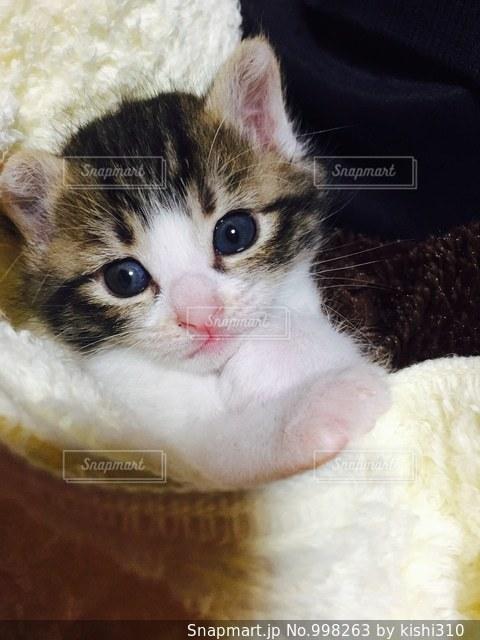 近くに猫のアップの写真・画像素材[998263]