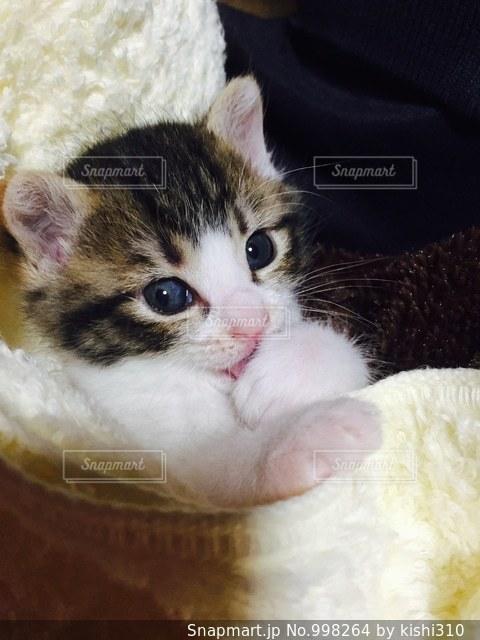 毛布の上に横になっている猫の写真・画像素材[998264]