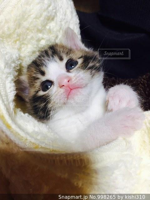 ベッドの上で横になっている茶色と白の猫の写真・画像素材[998265]