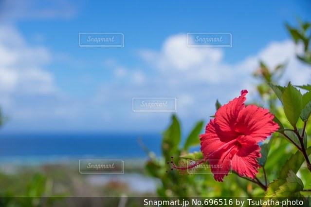 花の写真・画像素材[696516]