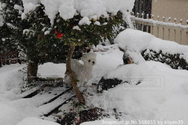犬の写真・画像素材[568055]