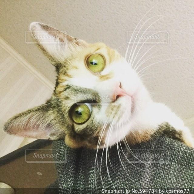猫の写真・画像素材[594784]