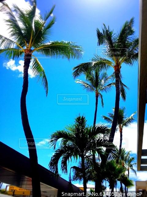 ハワイの写真・画像素材[614051]