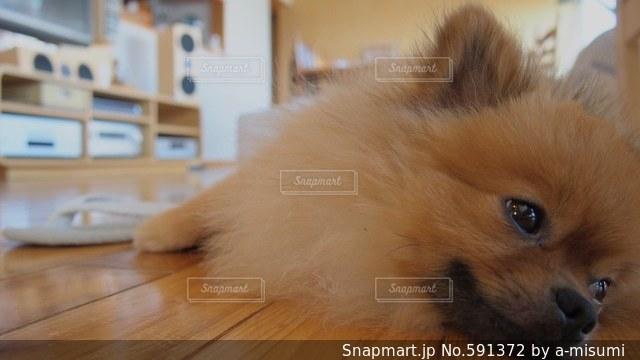 犬の写真・画像素材[591372]