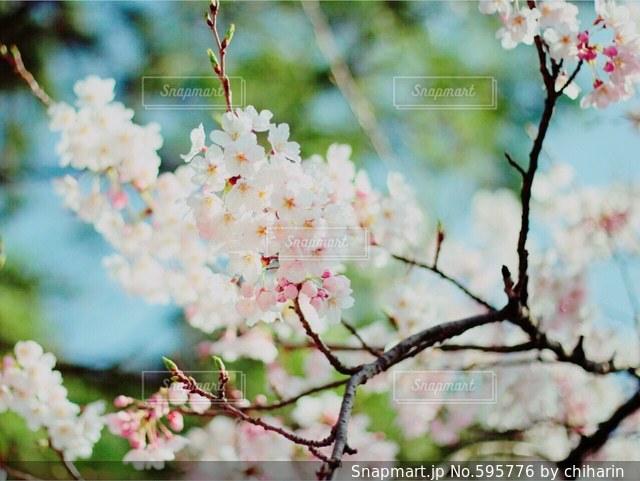 風景の写真・画像素材[595776]