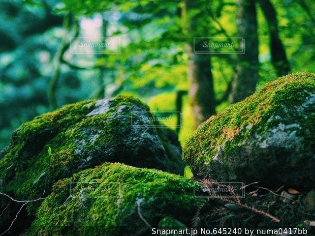 自然の写真・画像素材[645240]