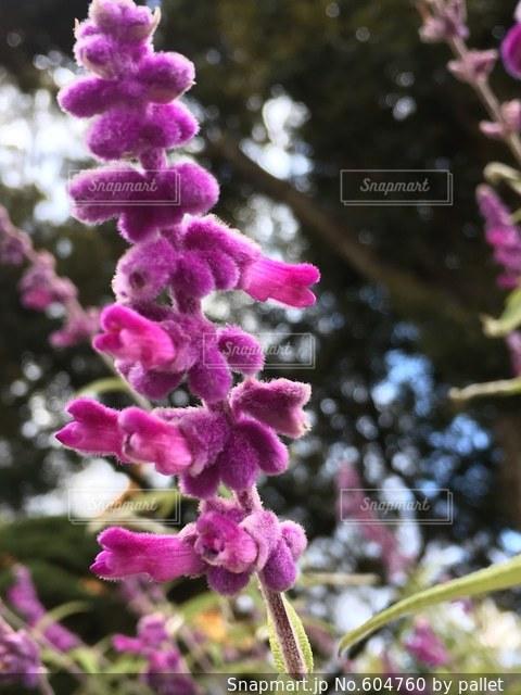花の写真・画像素材[604760]