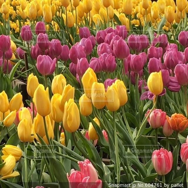 花の写真・画像素材[604761]