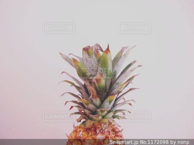 植物のパイナップルの写真・画像素材[1172098]