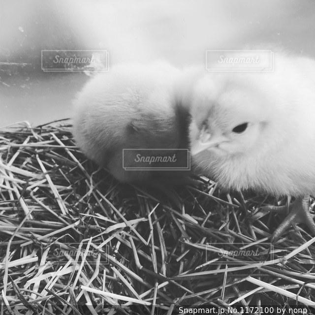 干し草の山の上に座っている鳥の写真・画像素材[1172100]