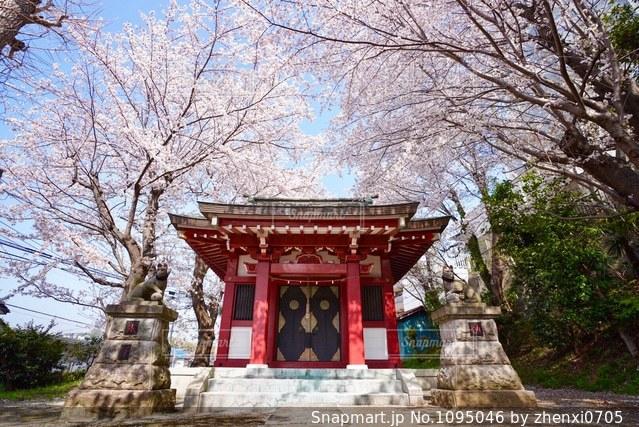 神社と桜の写真・画像素材[1095046]