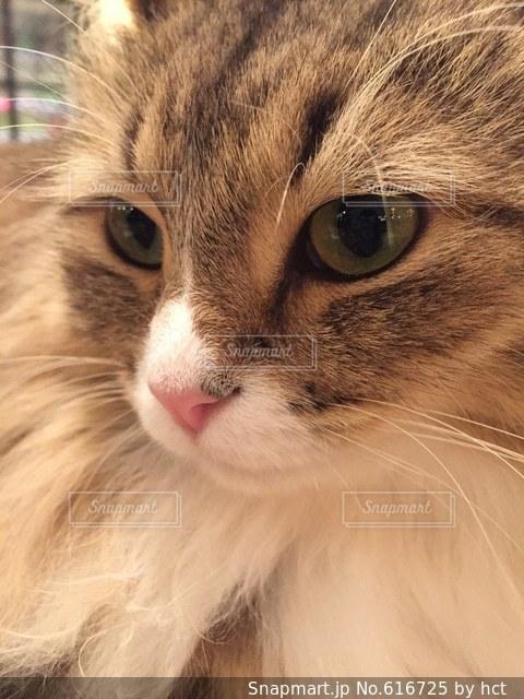 猫の写真・画像素材[616725]