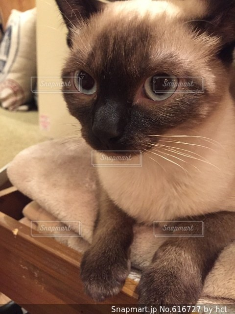 猫の写真・画像素材[616727]