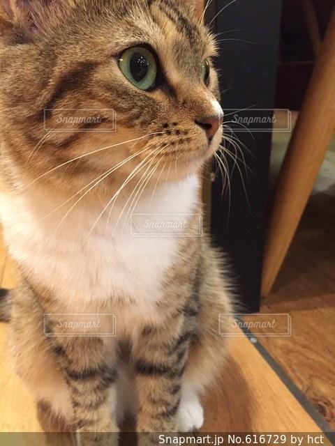 猫 - No.616729