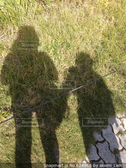 芝生の写真・画像素材[624966]