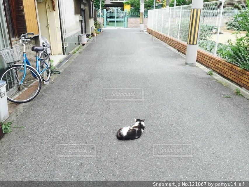 猫の写真・画像素材[121067]