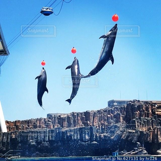 イルカの写真・画像素材[627131]