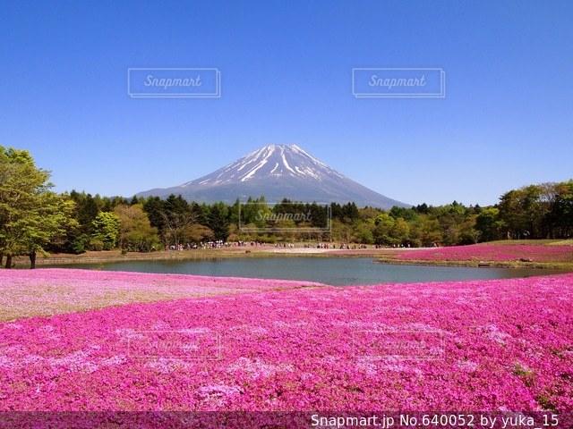 富士山の写真・画像素材[640052]