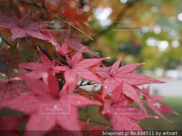 自然の写真・画像素材[648511]