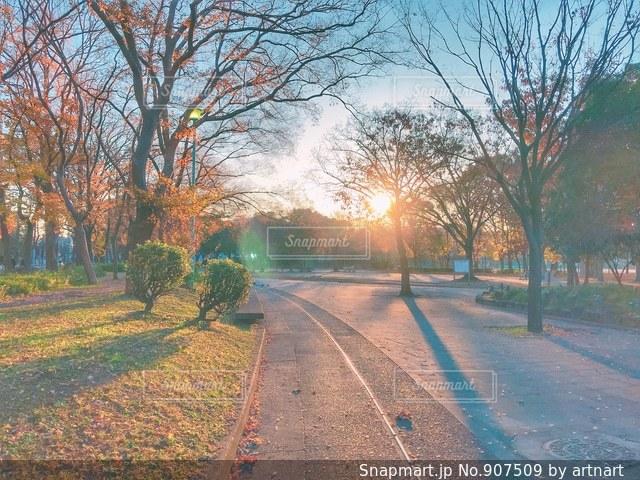 冬の朝の公園の写真・画像素材[907509]