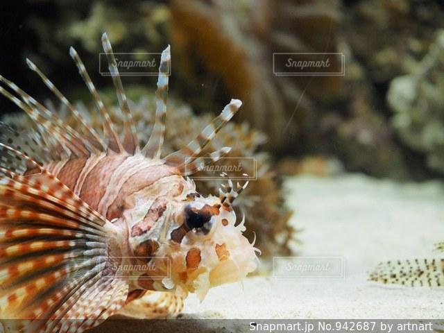 近くに魚のアップの写真・画像素材[942687]