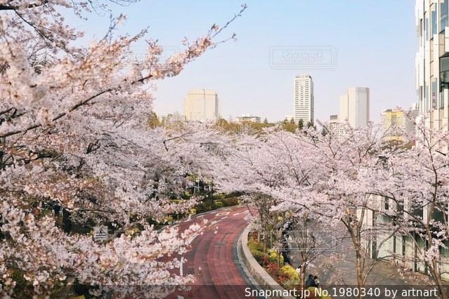 桜の写真・画像素材[1980340]