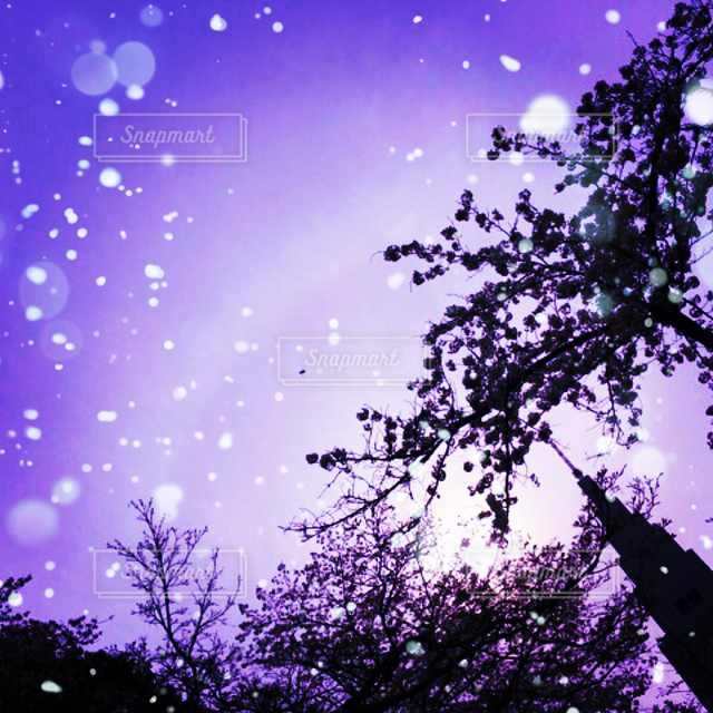お花畑の写真・画像素材[121461]