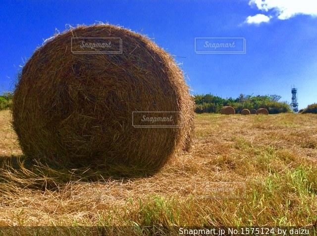 牧草ロールの写真・画像素材[1575124]