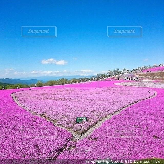 ピンクの写真・画像素材[632910]