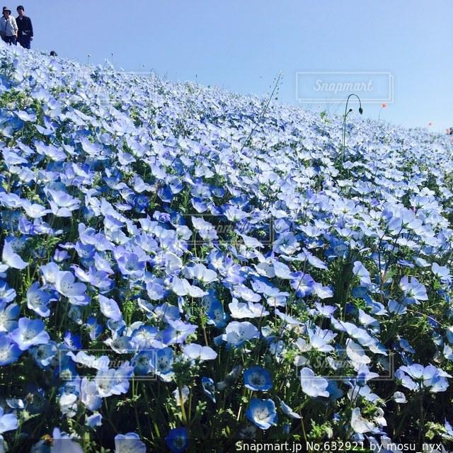 花畑の写真・画像素材[632921]