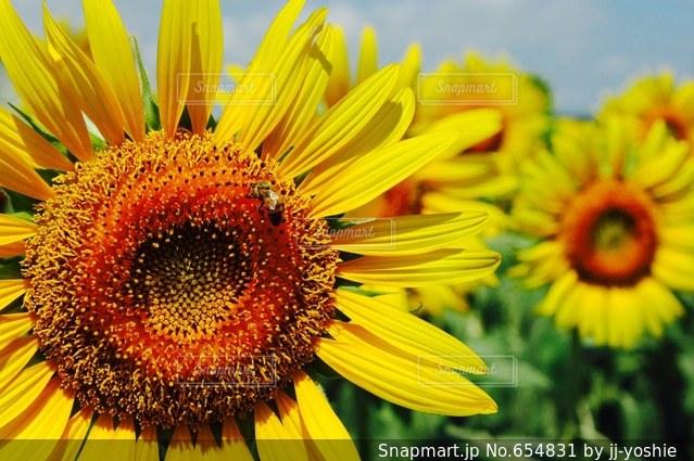 自然の写真・画像素材[654831]