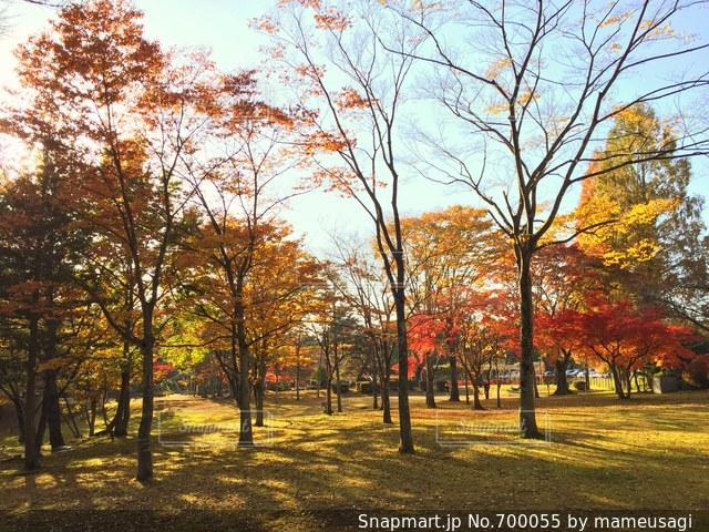 公園 - No.700055