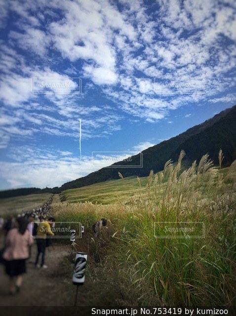 観光客が押し寄せるすすき野原の写真・画像素材[753419]