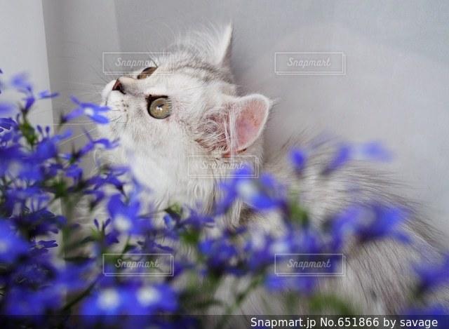 猫の写真・画像素材[651866]