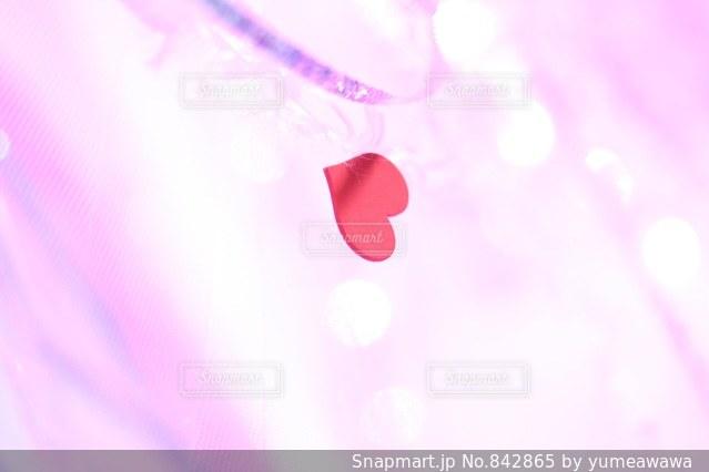 ピンクの写真・画像素材[842865]