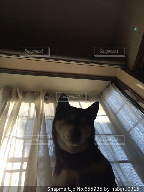 犬の写真・画像素材[655935]