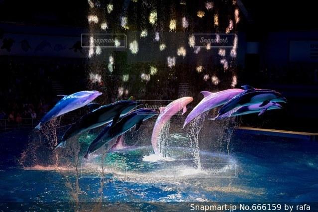 イルカの写真・画像素材[666159]