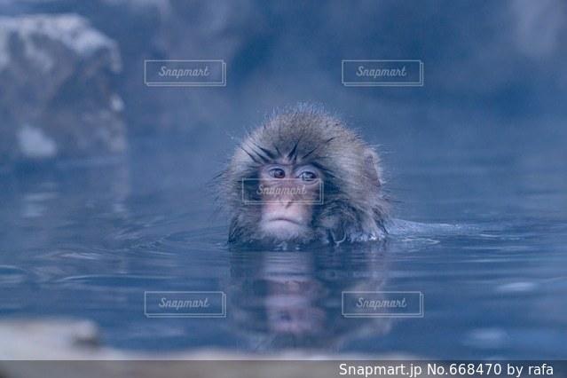 猿の写真・画像素材[668470]