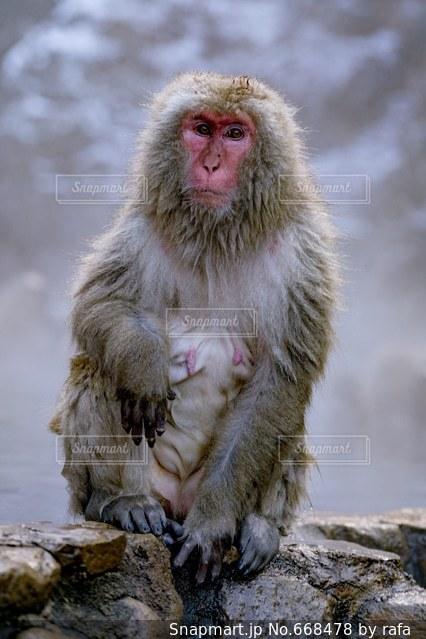 猿の写真・画像素材[668478]