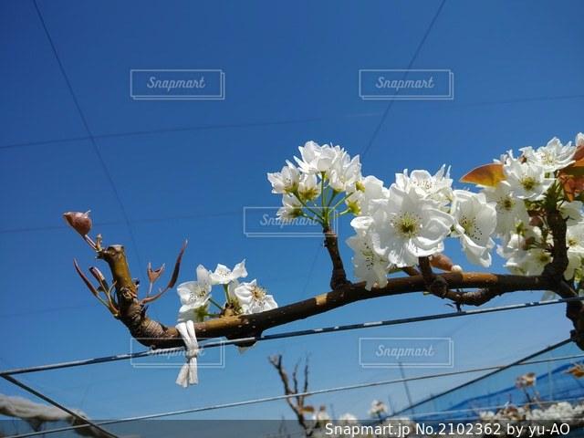 花のクローズアップの写真・画像素材[2102362]