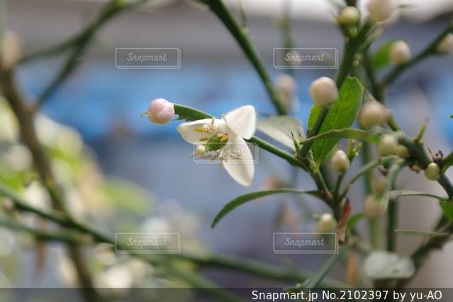 植物の上の白い花の写真・画像素材[2102397]