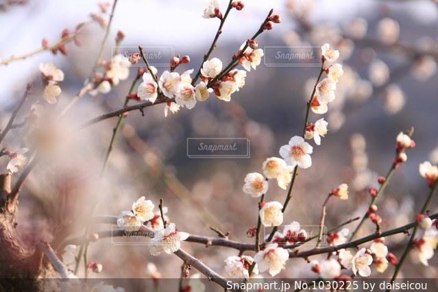 木の花の花瓶の写真・画像素材[1030225]