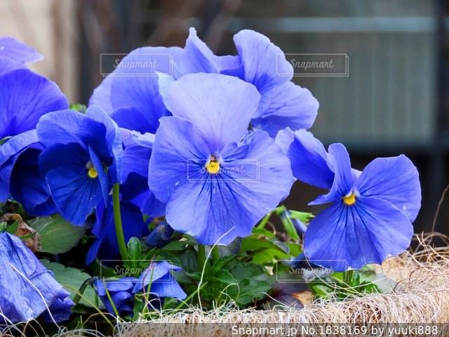 花の写真・画像素材[1838169]