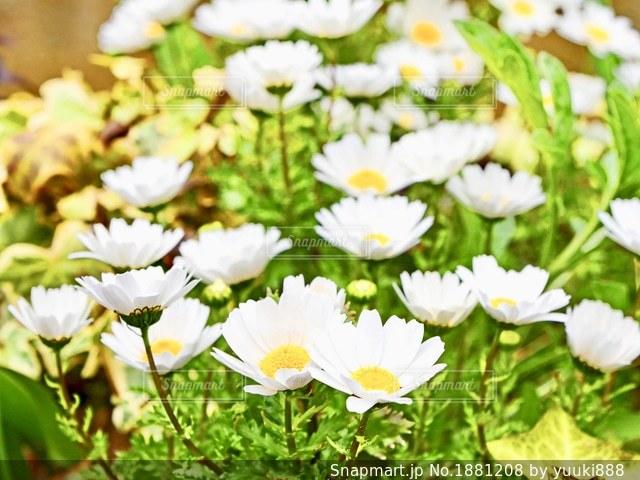 花の写真・画像素材[1881208]