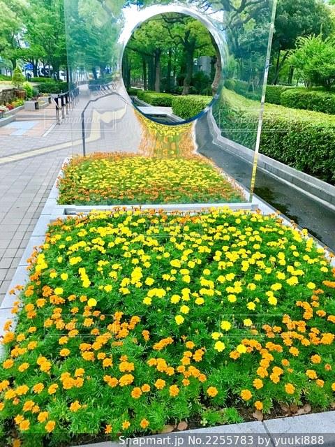 花の写真・画像素材[2255783]
