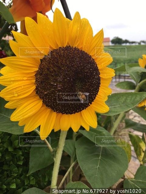 花の写真・画像素材[677927]