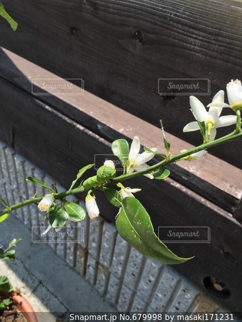 自然の写真・画像素材[679998]